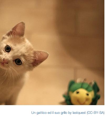 Kittens?